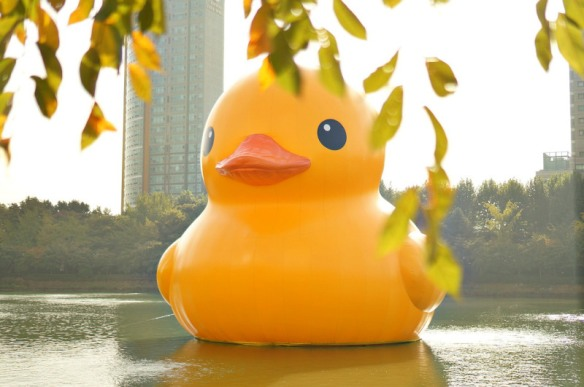 rubber-duck-546253_1280